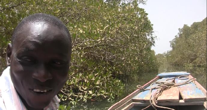 Manglares Delta saloum en Senegal