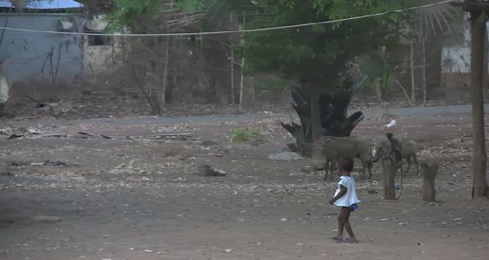 niña rodeada animales salvajes Niokolo